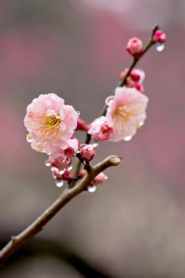 就活スタート時期の春の雨
